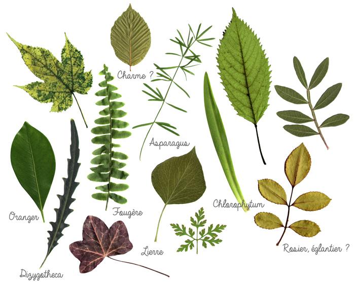 Faire un herbier original 20171006042058 exemples de designs utiles - Faire un herbier ...